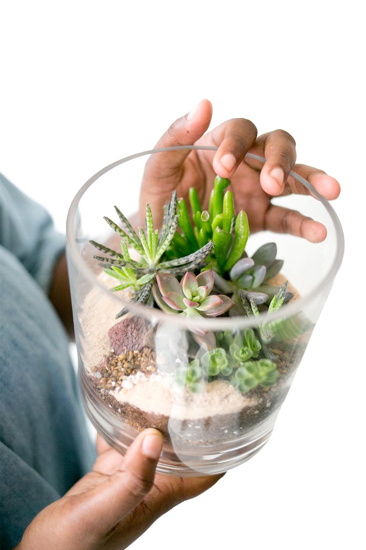 Zen Succulent product image